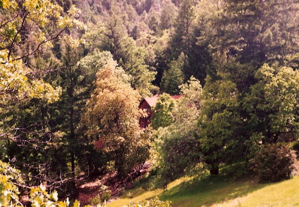 The house tucked away in the woods, seen from the top of the driveway.